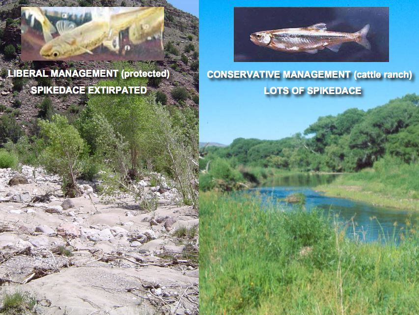 Conservatism Over Environmentalism